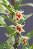 Орхидеи вися от ствола дерева в дождевом лесе Таиланда стоковая фотография