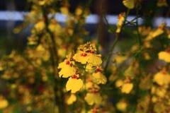 Орхидеи в саде Стоковая Фотография