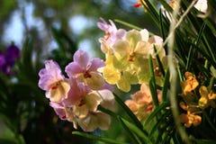 Орхидеи в саде Стоковые Изображения RF