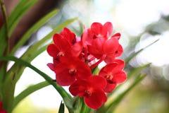 Орхидеи в саде Стоковые Изображения