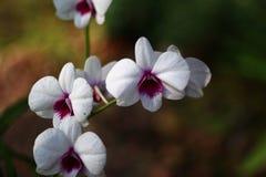 Орхидеи в саде Стоковое Изображение