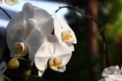 Орхидеи в саде Стоковое Фото