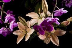 Орхидеи и лилии Стоковая Фотография