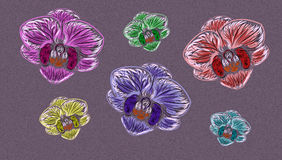 Орхидеи на предпосылке Стоковое Изображение