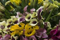 Орхидеи, розы и цветки Стоковая Фотография RF