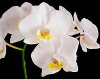Орхидеи Стоковые Фотографии RF