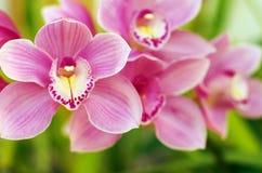 Орхидеи Стоковое Фото