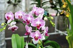 Орхидеи стоковые фото