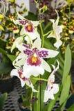Орхидеи #1 Стоковое Изображение