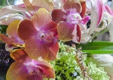 орхидеи Стоковая Фотография
