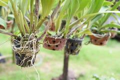 орхидеи Стоковые Изображения