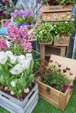 орхидеи mong рынка kong kok hong цветка Стоковая Фотография