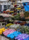 орхидеи mong рынка kong kok hong цветка Стоковое Изображение RF