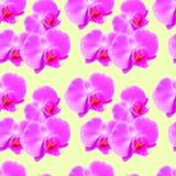Орхидея Безшовная текстура картины цветков предпосылка флористическая Стоковые Фото