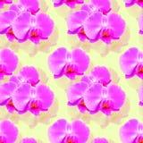 Орхидея Безшовная текстура картины цветков предпосылка флористическая Стоковое Изображение