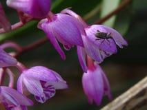 Орхидея Буша с долгоносиком Стоковые Фото