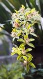 Орхидея весной, фарфор стоковые фото