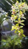 Орхидея весной, фарфор стоковое изображение rf