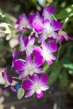 Орхидея в естественном саде Стоковая Фотография RF
