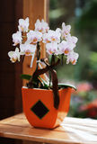 Орхидея в керамической вазе Стоковая Фотография