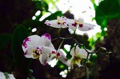 орхидея в одичалом Стоковое фото RF