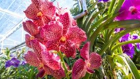 орхидея запятнала Стоковое Изображение