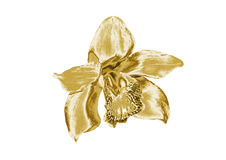 Орхидея золота иллюстрация штока