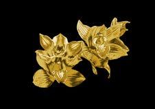 Орхидея золота бесплатная иллюстрация