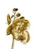 Орхидея золота иллюстрация вектора