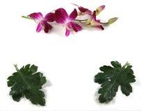 орхидея листьев рамки Стоковые Изображения