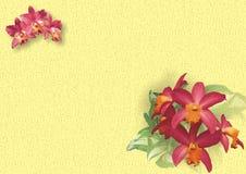 Орхидея Мириама Стоковые Фотографии RF