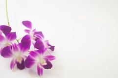 Орхидея на белой предпосылке с открытым космосом Стоковая Фотография RF