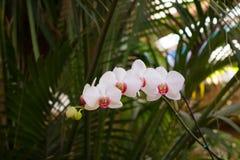 Орхидея на предпосылке Стоковое Изображение RF