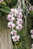 Орхидея на саде заливом Стоковые Изображения RF