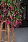 Орхидея ноги краба Стоковые Фотографии RF
