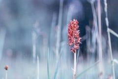 орхидея одичалая Стоковое фото RF
