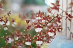 орхидея с предпосылкой Стоковое Изображение RF