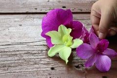 Орхидея утра Стоковые Фото