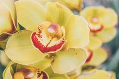 Орхидея цветка стоковые изображения rf