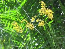 Орхидея - цветки Стоковое Изображение RF