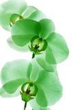 Орхидея 4 Стоковая Фотография
