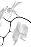 Орхидея 6 стоковые изображения