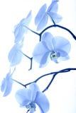 Орхидея 7 стоковая фотография rf