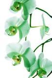 Орхидея 9 стоковая фотография