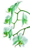 Орхидея 11 Стоковое фото RF