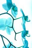 Орхидея 13 Стоковая Фотография RF