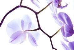 Орхидея 14 стоковое изображение rf