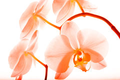 Орхидея 16 стоковое фото rf