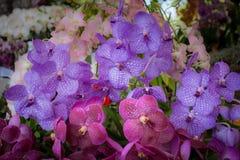 Орхидея Стоковое Фото