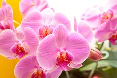Орхидея Стоковая Фотография RF